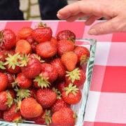 2021 – Gartentipp 25 – Erdbeersommer