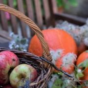 2021 – Gartentipp 39 – Dankbarkeit für die Früchte des Gartens